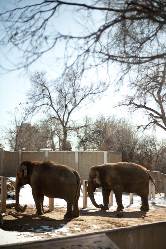 Zoo (9 of 15)