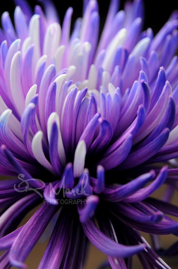 flower2rs