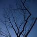 枯木の枝先