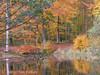 Autumn Denmark (Betty Olsen) Tags: autumn trees leaves denmark waterreflection espergærde abigfave anawesomeshot
