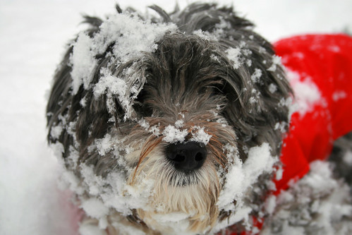 Foto cane buffo con neve