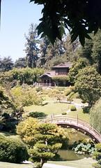 Chinese Garden at the Huntington Library (Jitterro) Tags: film garden pond kodak kodakportra400vc huntingtonlibrary chinesegarden 2009 400asa 400iso emulsion c41 prolab yashicalynx5000 jitterro swanlabs