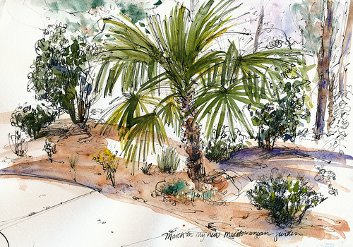 My new garden, palm revisited