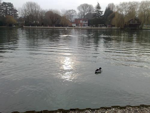 Riverside fauna