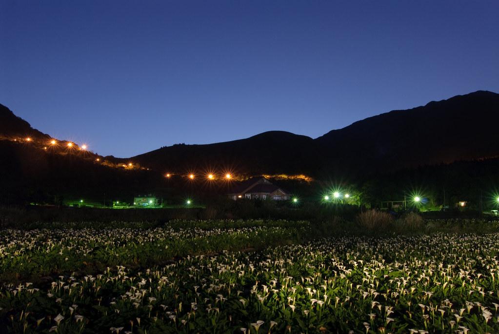 竹子湖日出前 Calla of gardeners Field at Dawn