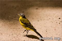 Awasa (Yonas wg) Tags: birds awassa ethiopian etiopia ethiopie etiopija etiyopya etiopa