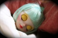 Iggy durmiendo