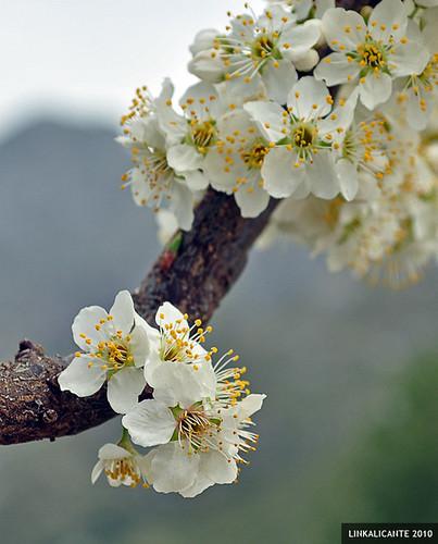 Primavera en Bernia