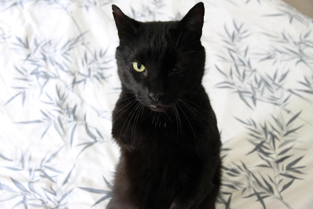 Three Legged Black Cat