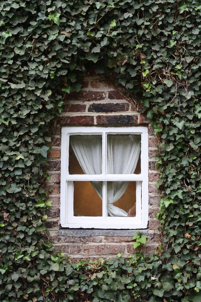 Cook's cottage window