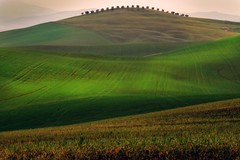 Take me to the top (David Butali) Tags: italy verde green grass rural canon landscape countryside spring italia view country hills campagna tuscany siena pienza toscana valdorcia landascape amiata asciano 500d pastur