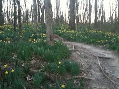 Singletrack spring
