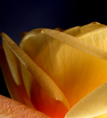 Una rosa de luz / Une rose de lumière /  Una rosa di luce