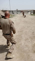 Military dog handlers (United States Marine Corps Official Page) Tags: dog afghanistan usmc training military marines marinecorps k9 unitedstatesmarinecorps humanitarianaid unitedstatesmarines counterinsurgency marinephotos marinepictures