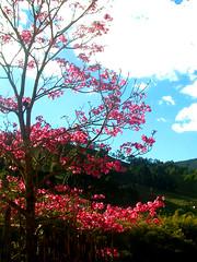 ...cores da natureza... (...anna christina...) Tags: brazil plant minasgerais nature brasil plantas natureza serradamantiqueira mataatlntica supershot annachristina mywinners platinumphoto flickrdiamond annachristinaoliveira