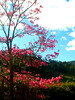 ...cores da natureza... (...anna christina...) Tags: brazil plant minasgerais nature brasil plantas natureza serradamantiqueira mataatlântica supershot annachristina mywinners platinumphoto flickrdiamond annachristinaoliveira