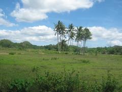 COCONUT TREES (PINOY PHOTOGRAPHER) Tags: world trip travel asia tour coconut philippines bohol filipino visayas pilipinas bilar