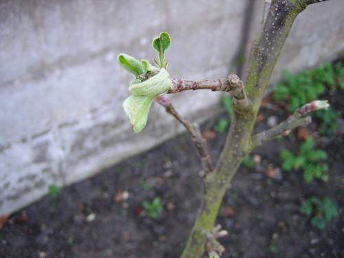 garden042010 032