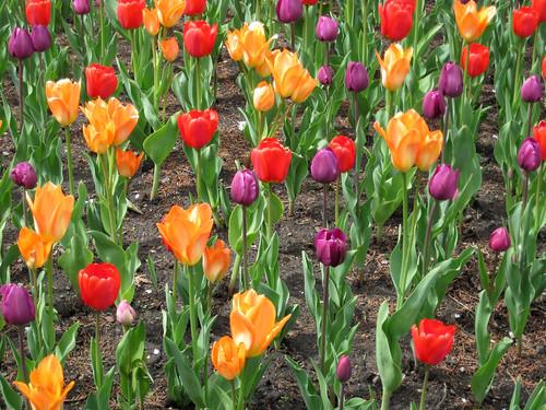 Millennium Park Spring 2010-9