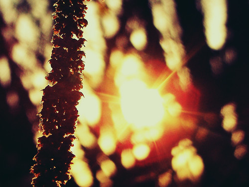 Sonnenuntergang im Wald #2