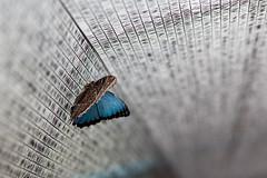baudchon-baluchon-mindo-papillons-48