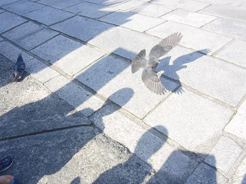 鳩の羽ばたき
