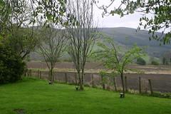 Memorial Trees at Castle Menzies