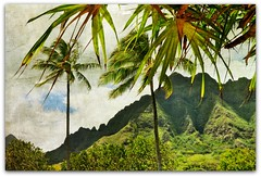 hawaiian textures (beesquare) Tags: sky sun mountains hawaii oahu palmtrees tropical lush kualoaregionalpark