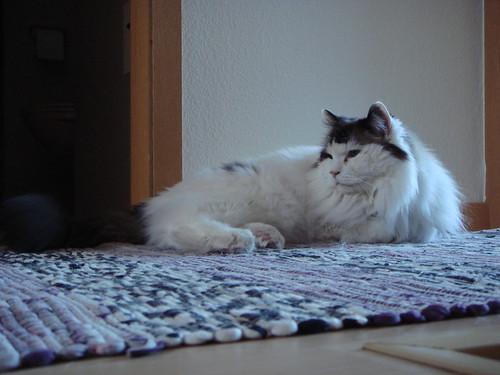 29.Apr.10 Guard Cat on duty