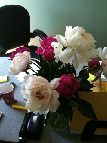 Peonies make work nicer.