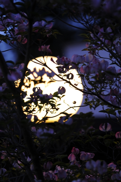 05-07-2010_moon_or_lamp