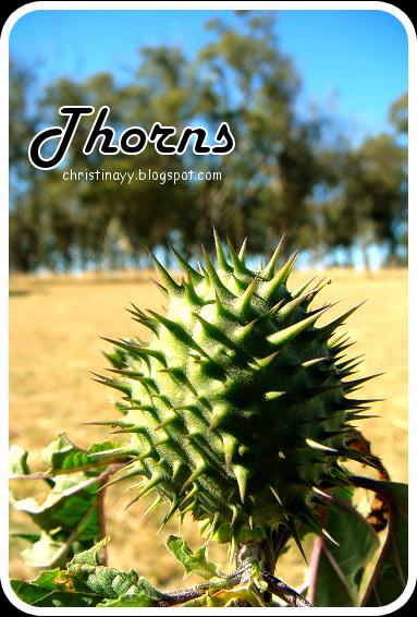 Stanthorpe: Thorns