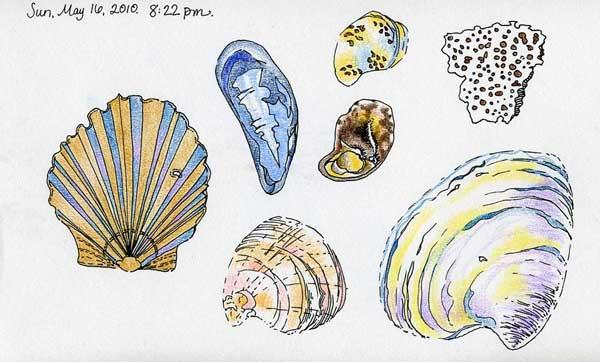 5-16-2010, shells