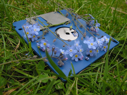 Forget-me-not Disk