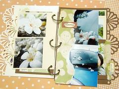 油桐花p4