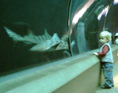 Jules and the Leopard Shark