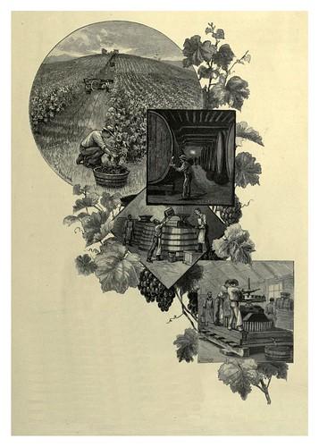 021-Viñedos en Albury Nueva Gales del Sur-Australasia illustrated (1892)- Andrew Garran
