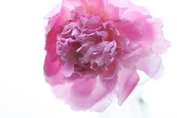 bloom3b