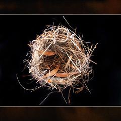 Uses for string (shastadaisy~) Tags: abandoned birdsnest dragondaggeraward artistictreasurechest magicunicornverybest selectbestexcellence magicunicornmasterpieces sbfmasterpiece usesforstring