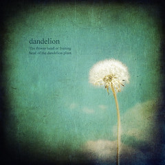 * Dandelion *