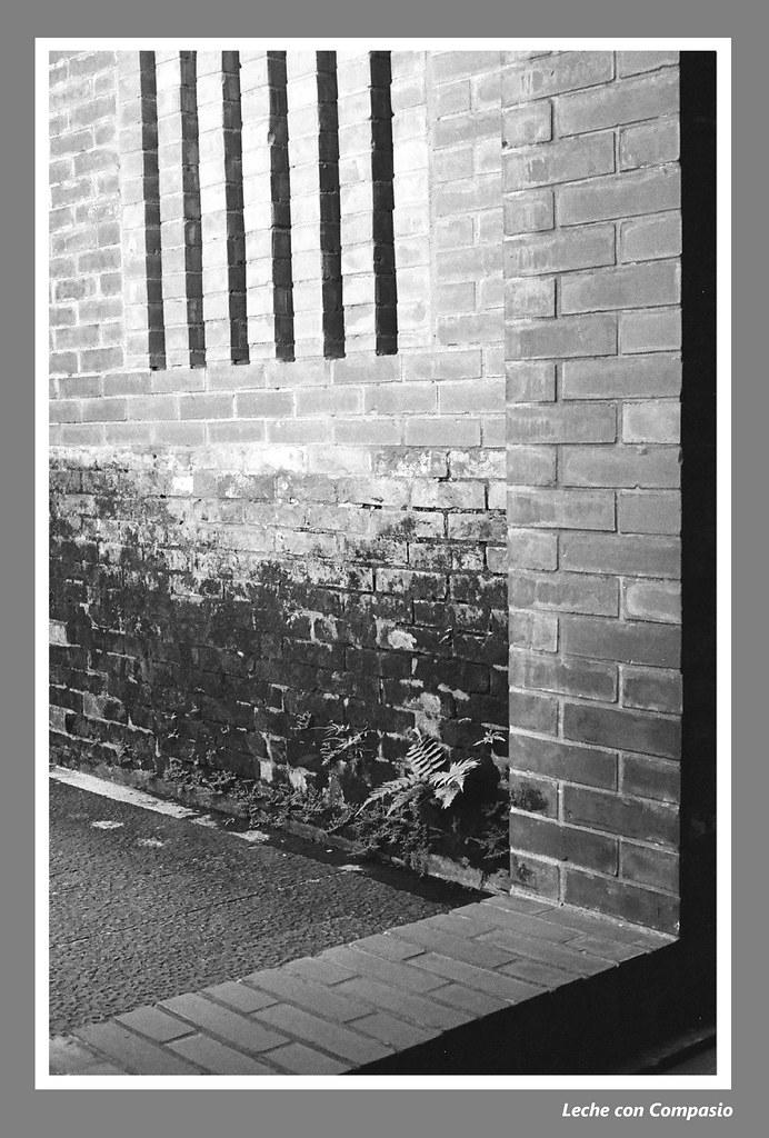 Windows & doorframe by bricks (??.???)