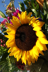 ~ wishing u a flowery sunny sunday ~ (^i^heavensdarkangel2) Tags: flowers macro nature closeup earth sunflower bouquet pagosasprings newcam heavensdarkangel sonydslra200 desbahallison heavensdarkangel2