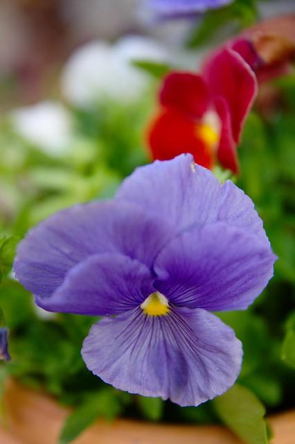 FlowerColor3