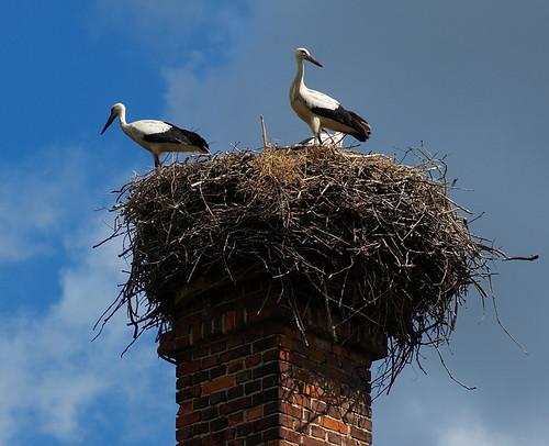 Nesting Storks