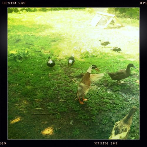 Quackery #1