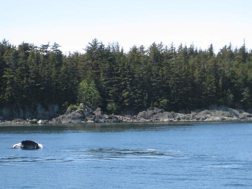 humpback whale face juneau