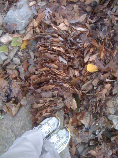 leaves_puzzle