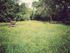 Buttercups (danielleyc) Tags: summer nature sunshine countryside walk sunny lancashire walkies colne canonixus95is danielleyc