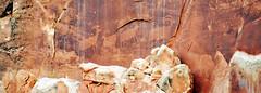 Bighorn sheep petroglyphs capitol reef pano (houstonryan) Tags: park light landscape photography golden utah highway day ryan central houston southern capitol national hour end 24 redrock reef houstonryan