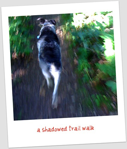 shadow walk begins